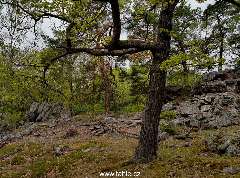 Údolí Ticha
